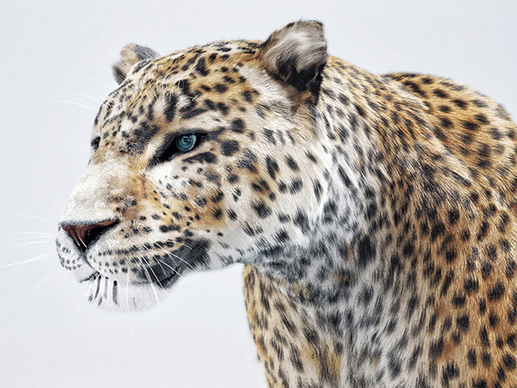 Leopard Schweppes - Hive Innovative Group - Digital Advertising Agency